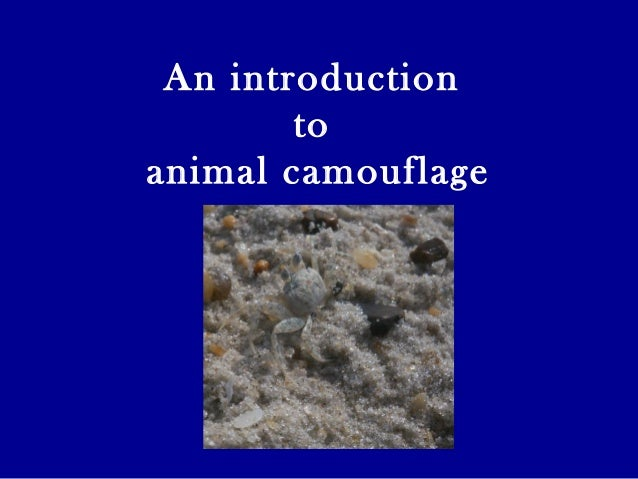An introduction to animal camouflage