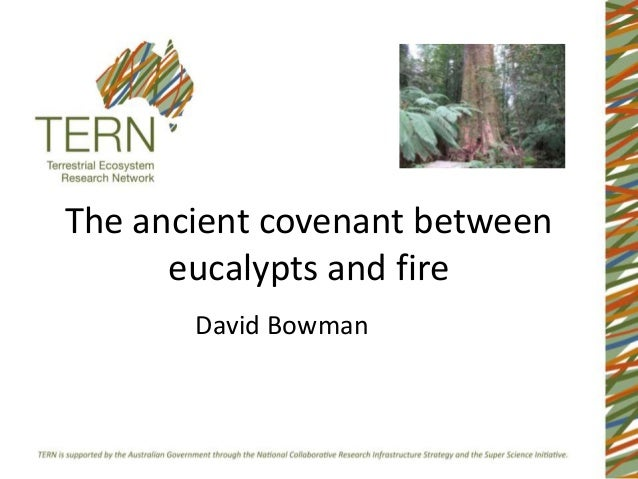 The ancient covenant between      eucalypts and fire       David Bowman