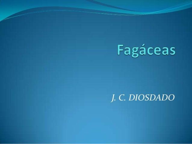 J. C. DIOSDADO