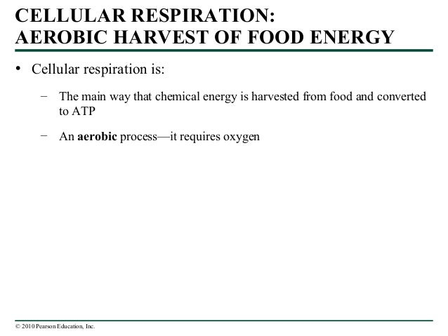 CELLULAR RESPIRATION: AEROBIC HARVEST OF FOOD ENERGY • Cellular respiration is: – The main way that chemical energy is har...