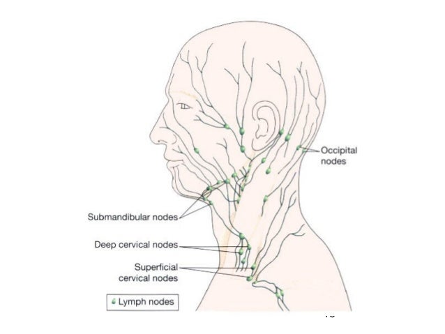 06 Lymphatic System