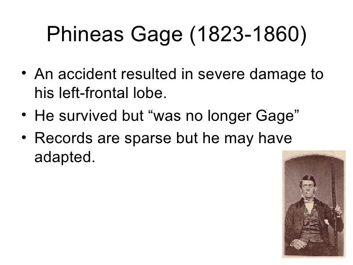 cerebral cortex and phineas gage Cerebral cortex, volume 25, issue 12, 1 december 2015, pages  lesion from  the computerized tomography of phineas gage's skull and the.