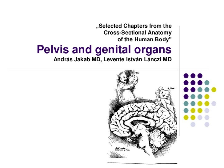 """Selected Chapters from the                   Cross-Sectional Anatomy                         of the Human Body""Pelvis and..."