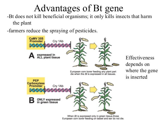 highlighting the many benefits of gene technology in food production But many of them say genetic engineering is a had a significant impact on food production and will make an even to mit technology review events.