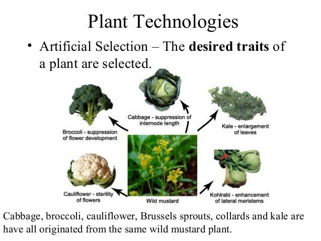 06 Practical Knowledge Of Plants
