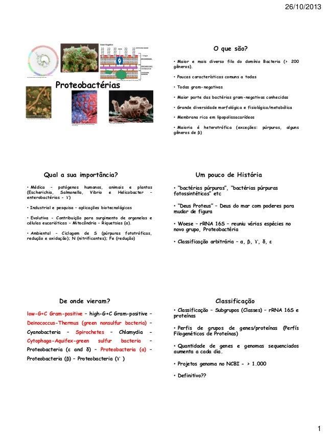 26/10/2013  O que são? • Maior e mais diverso filo do domínio Bacteria (> 200 gêneros). http://www.a tbatt.com/blog/18.asp...