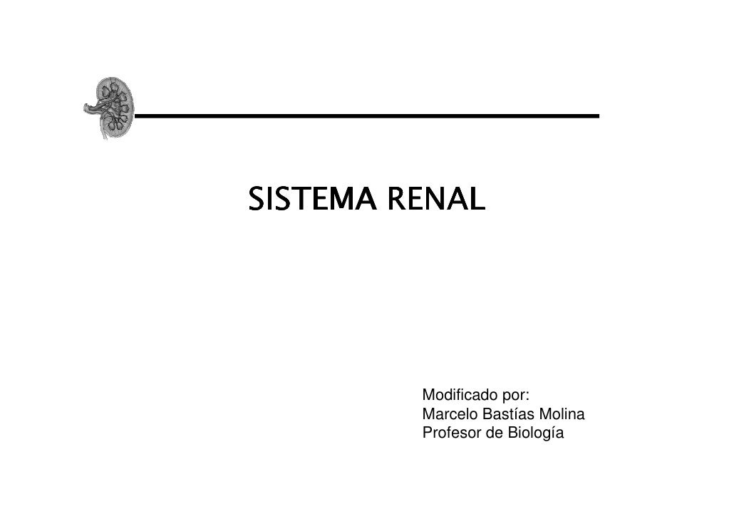 SISTEMA RENAL         Modificado por:         Marcelo Bastías Molina         Profesor de Biología