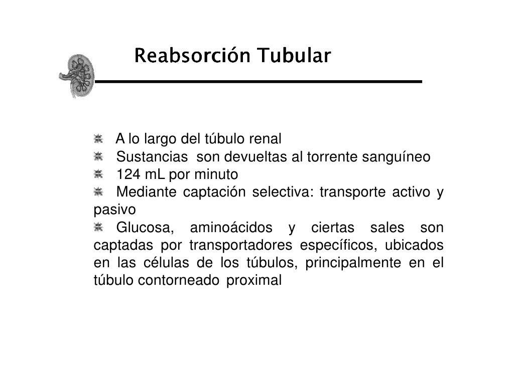 Reabsorción Tubular   A lo largo del túbulo renal   Sustancias son devueltas al torrente sanguíneo   124 mL por minuto   M...