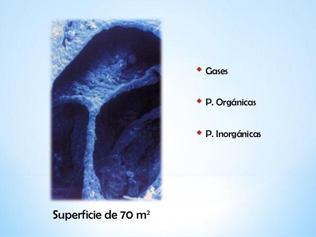 Indicaciones y criterios de utilización...Inmunodeficiencias Slide 2