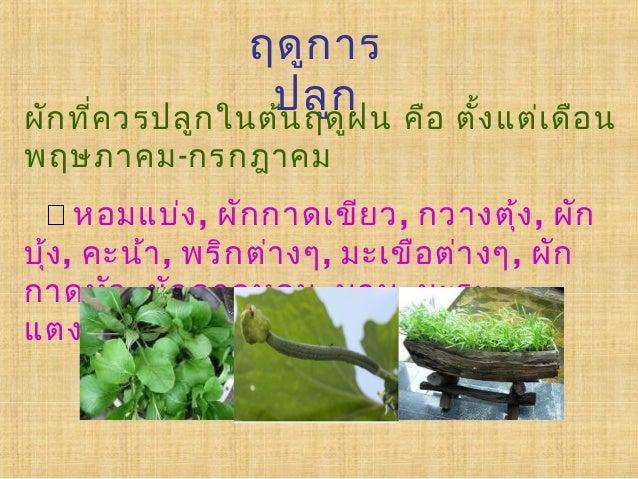 ประโยชน์ของการปลูกผักสวนครัวประโยชน์ของการปลูกผักสวนครัว