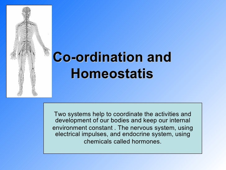 Co-ordination and Homeostatis Two systems help to coordinate the activities and development of our bodies and keep our int...