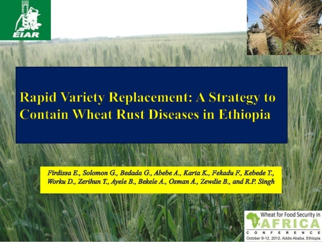 Outline1. Introduction to wheat and production constraints2. Fast track release of rust resistant bread wheat varieties in...