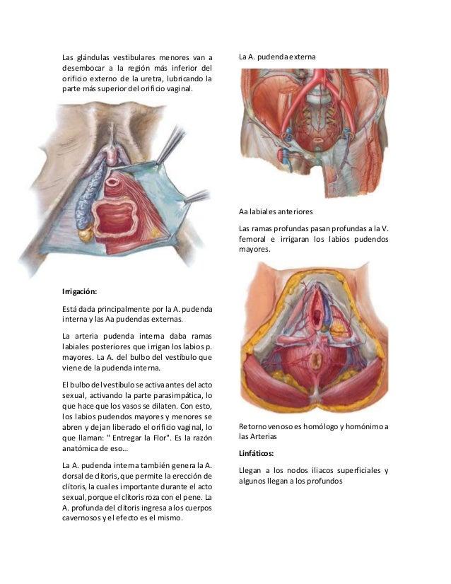 07 genitales femeninos