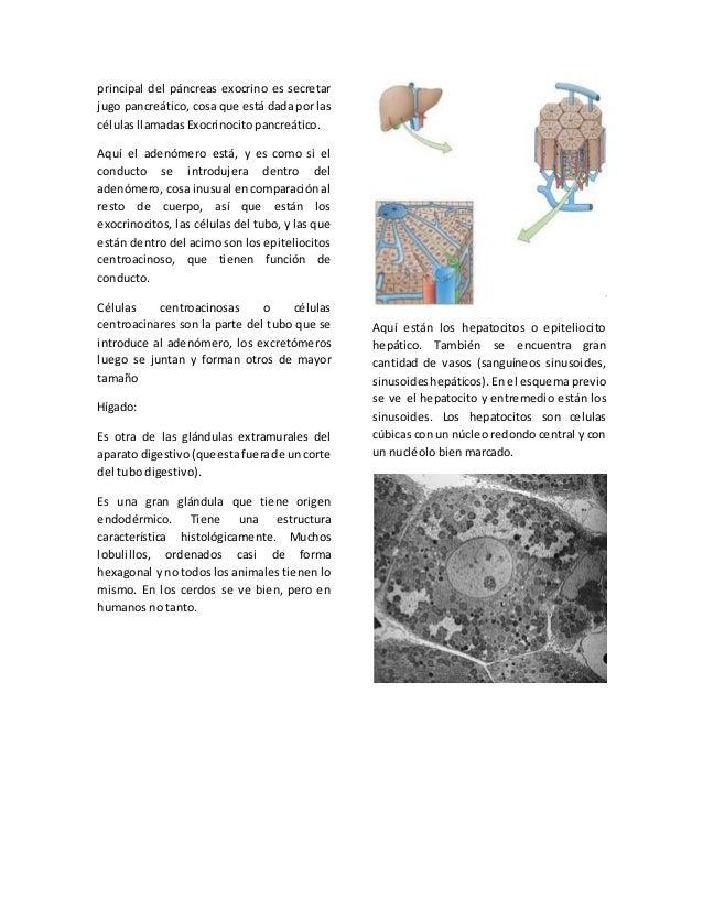 07 histología de aparato digestivo