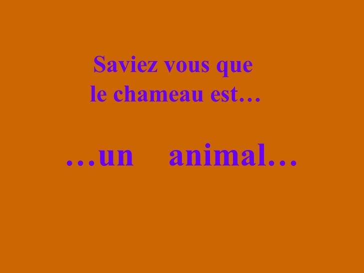 Saviez vous que  le chameau est… <ul><li>… un  animal… </li></ul>