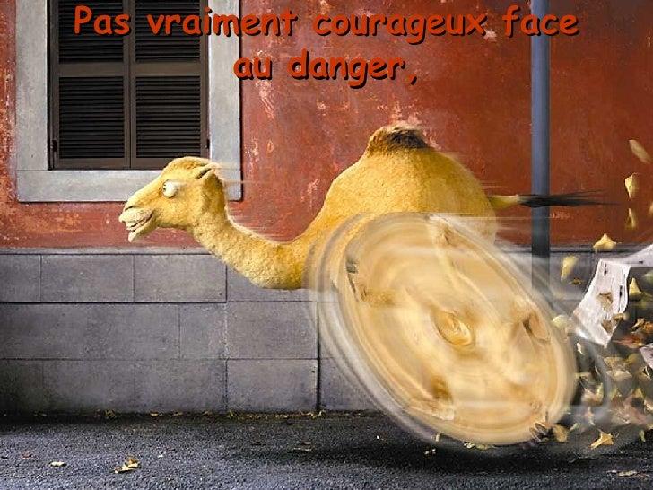 Pas vraiment courageux face au danger,