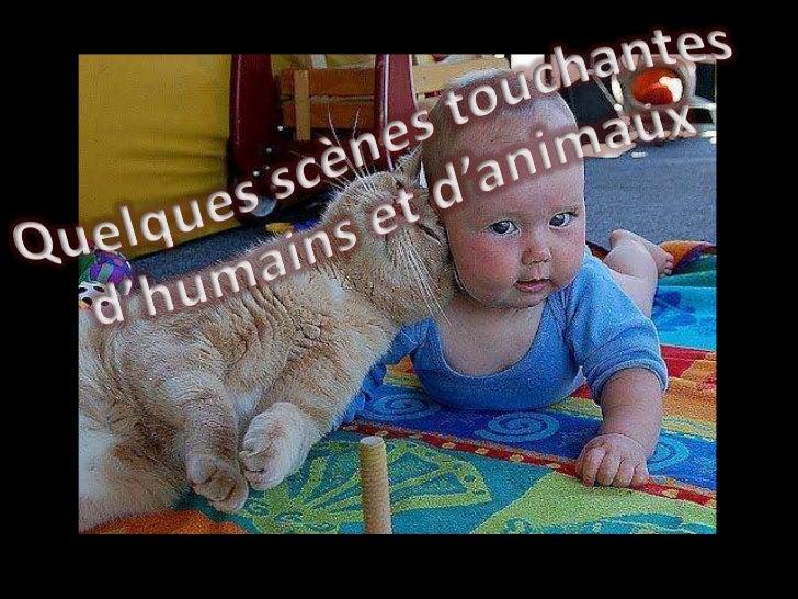 Diaporama PPS réalisé pourhttp://www.diaporamas-a-la-con.com