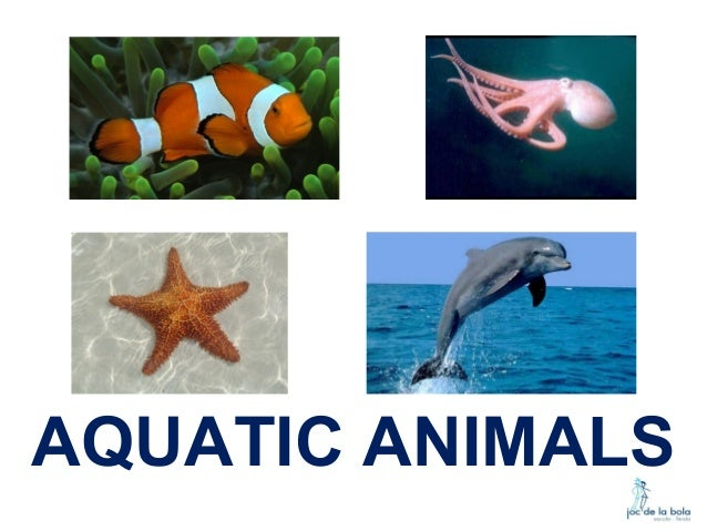 Aquatic Animals With Names Pictures