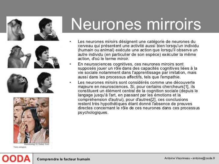 071 facteur humain for Neurones miroir