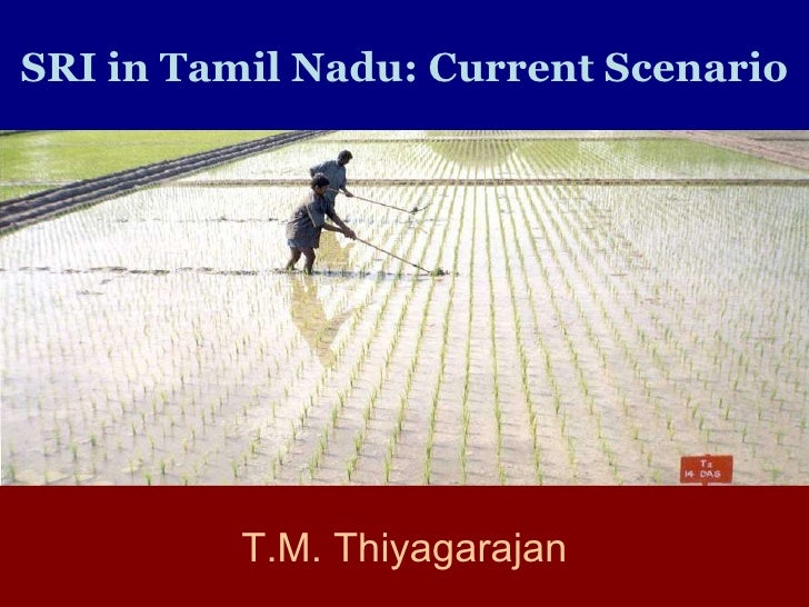 SRI in Tamil Nadu: Current Scenario T.M. Thiyagarajan