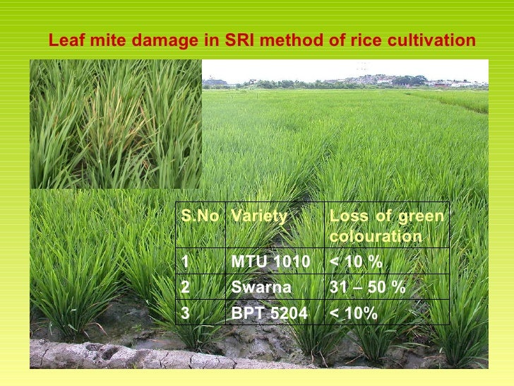 Rice cultivation different species and methods