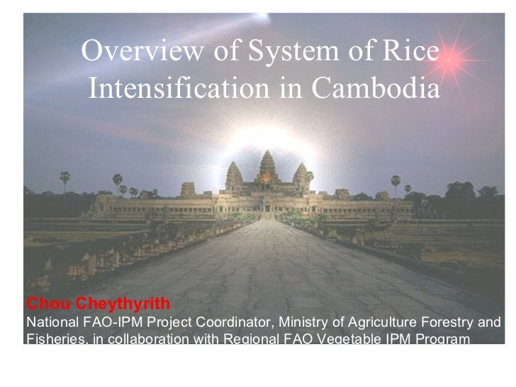 Overview of System of Rice  Intensification in Cambodia Chou Cheythyrith National FAO-IPM Project Coordinator, Ministry of...