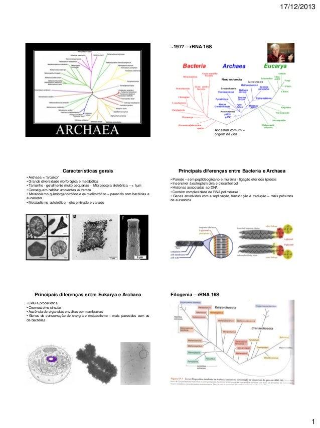 17/12/2013  ~1977 – rRNA 16S  Nanoarchaeota  Ancestral comum – origem da vida  Características gerais  Principais diferenç...