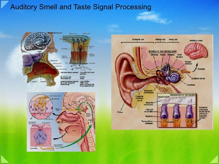 Auditory Smell and Taste Signal Processing