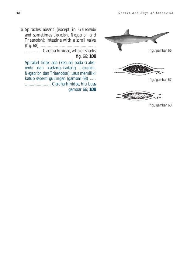 Download 930+ Gambar Ikan Hiu Di Buku Gambar Terbaru