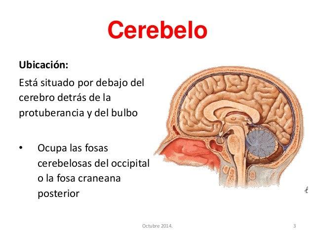 Cerebelo Slide 3