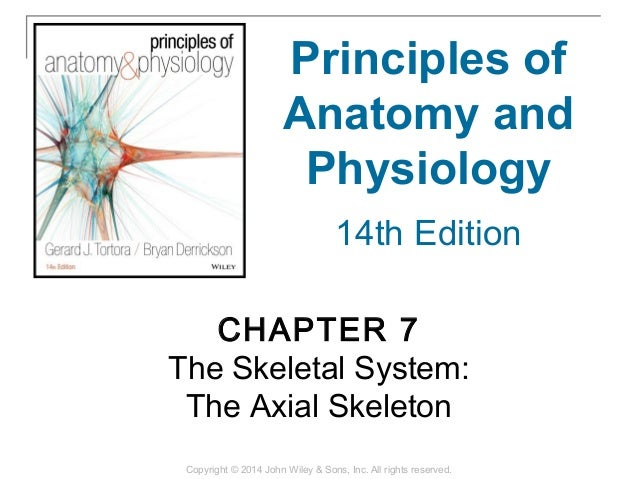 07 [chapter 7 the skeletal system the axial skeleton]