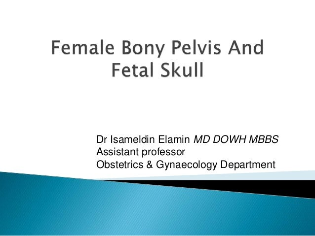 Dr Isameldin Elamin MD DOWH MBBS Assistant professor Obstetrics & Gynaecology Department