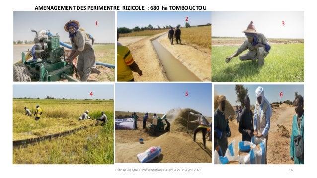 1 2 3 4 5 6 AMENAGEMENT DES PERIMENTRE RIZICOLE : 680 ha TOMBOUCTOU PRP AGIR MALI Présentation au RPCA du 8 Avril 2021 14