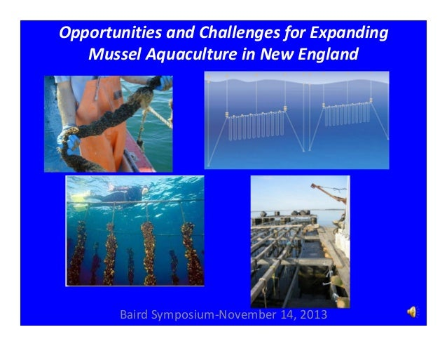 Opportunities and Challenges for Expanding  Mussel Aquaculture in New England  Baird Symposium‐November 14, 2013