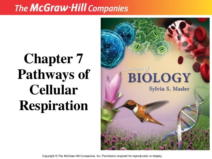 Copyright  ©  The McGraw-Hill Companies, Inc. Permission required for reproduction or display. Chapter 7 Pathways of Cellu...