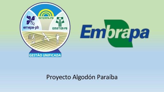 Proyecto Algodón Paraíba