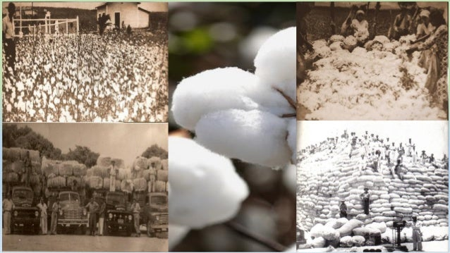  Revitalizar la cadena de producción de algodón, coordinada y sostenible con la Agricultura Familiar Paraibana Objetivos