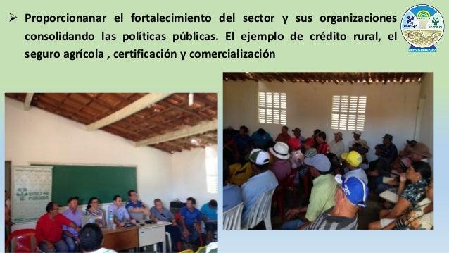 Planificación – EMATER y EMBRAPA 1. Estudio de mercado • La demanda inicial Cataguazes - 14 toneladas de fibra • La empres...