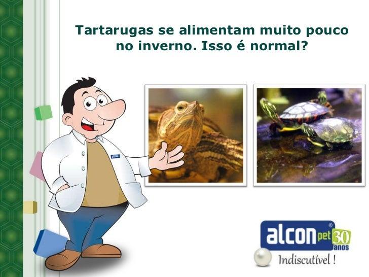 Tartarugas se alimentam muito pouco     no inverno. Isso é normal?