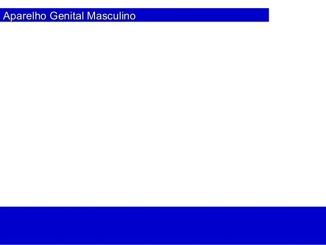 Aparelho Genital MasculinoAparelho Genital Masculino