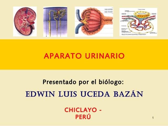 APARATO URINARIO Presentado por el biólogo: EDWIN LUIS UCEDA BAZÁN CHICLAYO - PERÚ 1