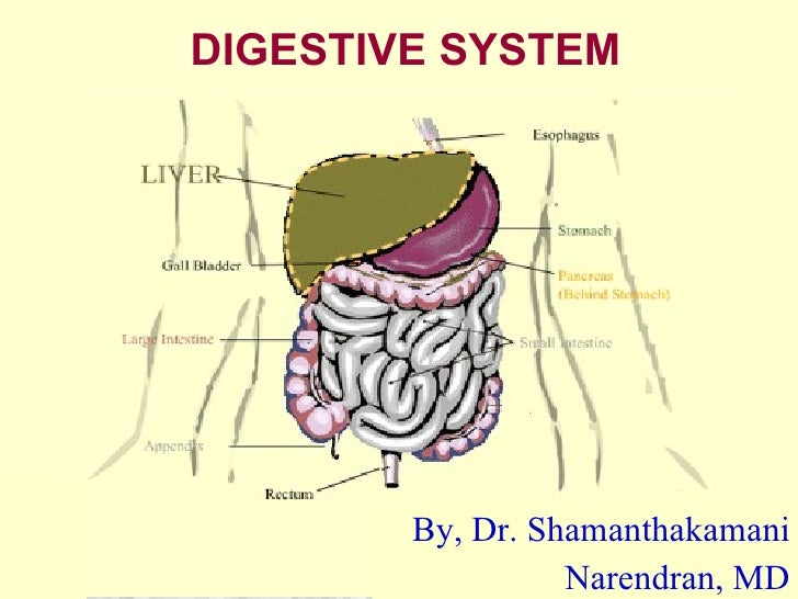 DIGESTIVE SYSTEM By, Dr. Shamanthakamani Narendran, MD
