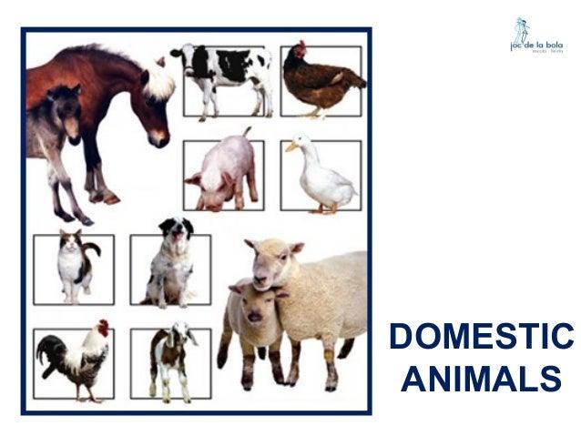 DOMESTIC ANIMALS - WILD ANIMALS Slide 2