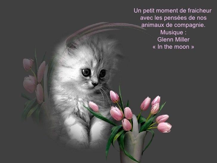 Un petit moment de fraicheur  avec les pensées de nos animaux de compagnie. Musique : Glenn Miller «In the moon» Diapora...