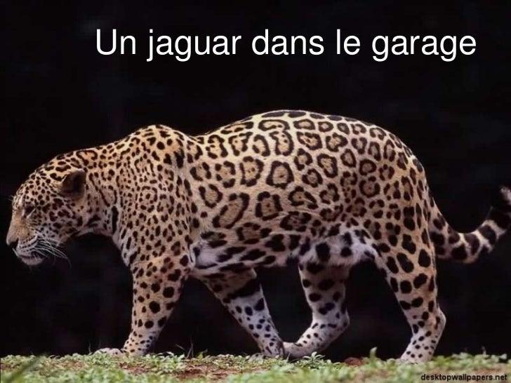 Un jaguar dans le garage