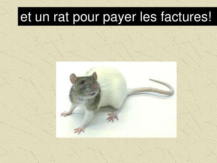 et un rat pour payer les factures!