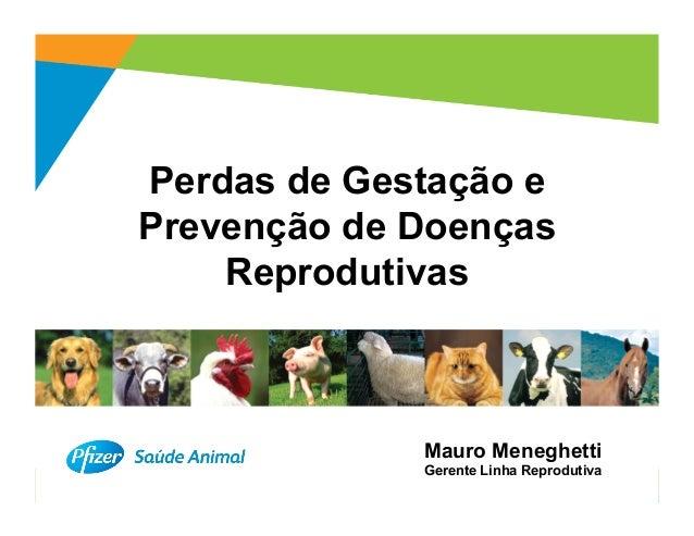 Perdas de Gestação ePrevenção de Doenças    Reprodutivas             Mauro Meneghetti             Gerente Linha Reprodutiv...