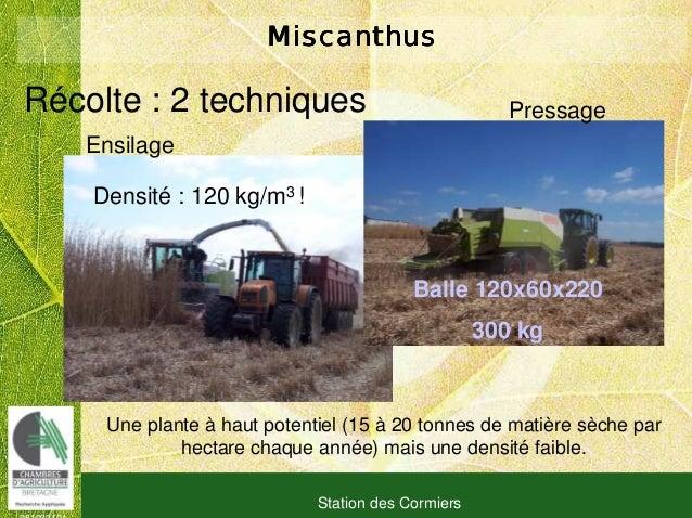 081030101 Station des Cormiers MiscanthusMiscanthusMiscanthusMiscanthus Ensilage PressageRécolte : 2 techniques Densité : ...