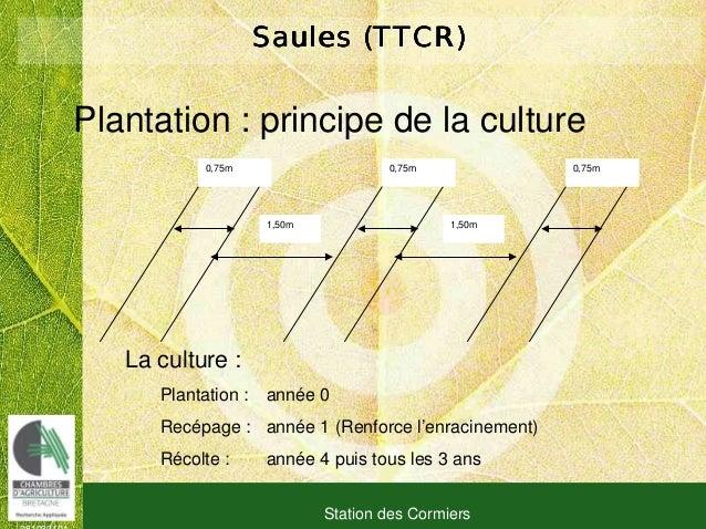 081030101 Station des Cormiers Saules (TTCR)Saules (TTCR)Saules (TTCR)Saules (TTCR) Plantation : principe de la culture 0,...