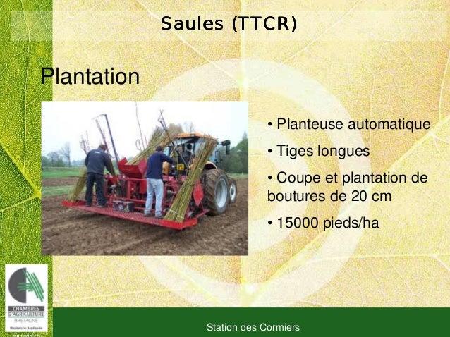081030101 Station des Cormiers Saules (TTCR)Saules (TTCR)Saules (TTCR)Saules (TTCR) Plantation • Planteuse automatique • T...